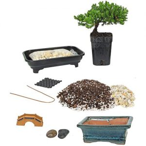Deluxe Bonsai Tree Starter Kit
