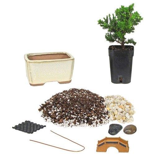 Starter 4 Ceramic Bonsai Kit Eve S Garden Gifts