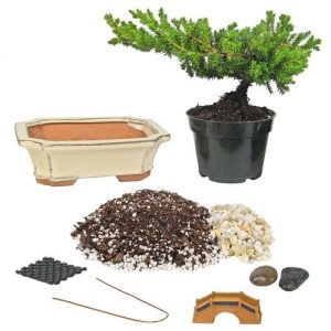 Small Bonsai Kit