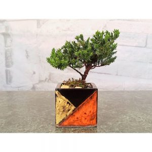 """Mosaic Square 3"""" Bonsai Tree"""