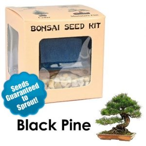 Black Pine Bonsai Seed Kit