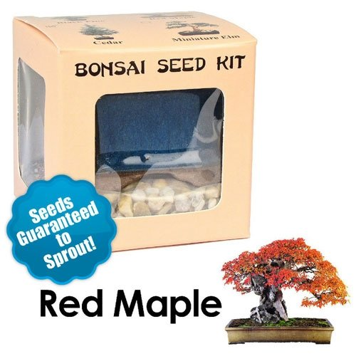 Red Maple Bonsai Seed Kit