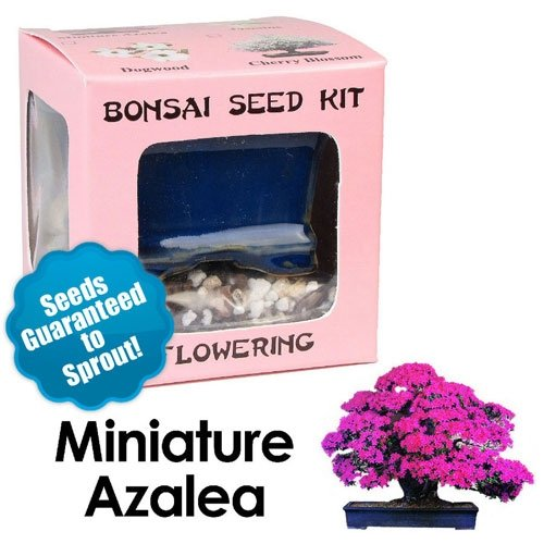 Miniature Azalea Bonsai Seed Kit Eve S Garden Gifts