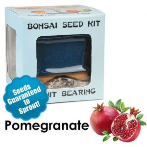 Pomegranate Bonsai Seed Kit