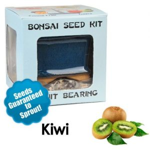 Kiwi Bonsai Seed Kit