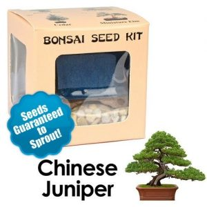 Chinese Juniper Bonsai Seed Kit