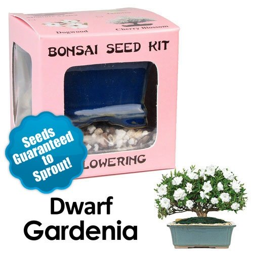 Dwarf Gardenia Bonsai Seed Kit