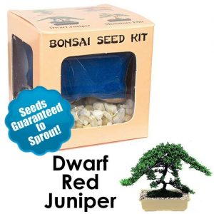 Dwarf Red Juniper Bonsai Seed Kit