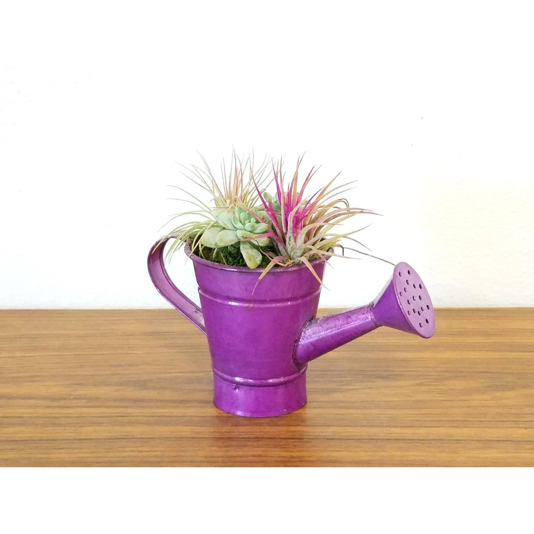 Watering Can Petite Air Plants Succulents Eve S Garden Gifts