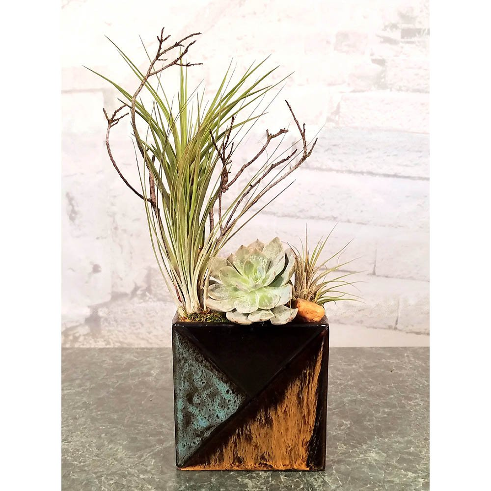 Mosaic Rectangle Air Plants Succulents Cactus