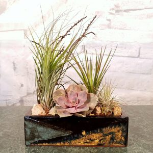 Mosaic Rectangular Vase Assorted with Assorted Air Plants, Succulents, and Cactus
