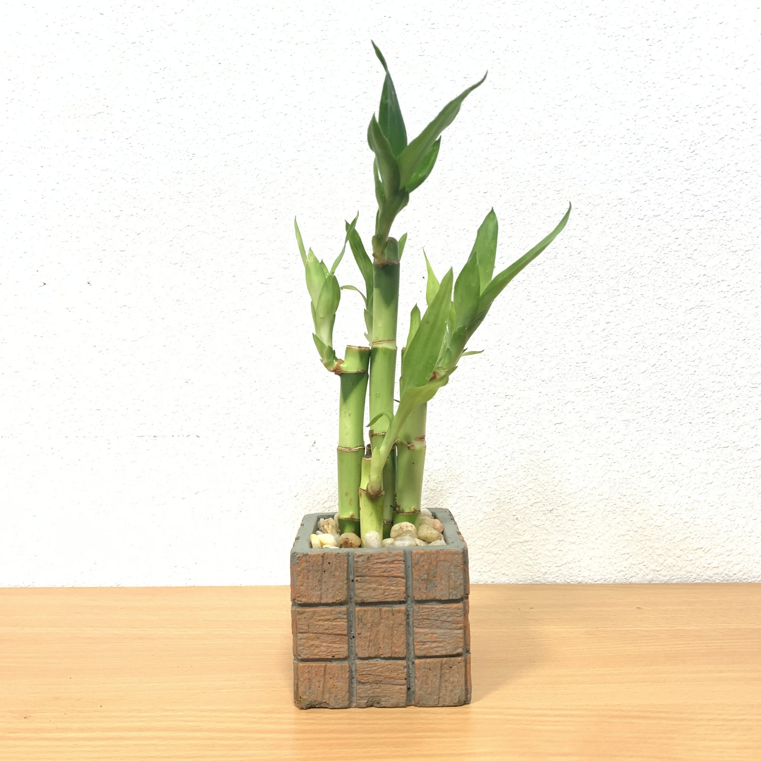 Terracotta Tile Small Square Vase Lucky Bamboo Straight Eve S
